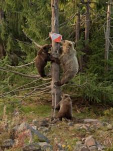 o-bear